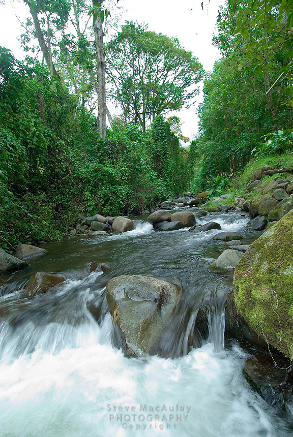 Mountain stream, Parque Internacional La Amistad, Panama