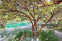 Native Plant Gardens