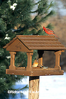 00585-00713  Northern Cardinals & Tufted Titmouse at feeder in winter Marion Co.  IL