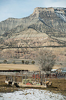 Livestock and farming near the town of Parachute and village of Battlement Mesa, Colorado, Wednesday, February 21, 2013. Fracking has been a hot topic for the area around Battlement Mesa and Parachute, Colorado with concerned citizens wanting more studies on potential health issues and drilling companies growing their operations.<br /> <br /> Photo by Matt Nager