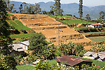 Landscape view of intensively cultivated terraced valley sides, near Nuwara Eliya, Central Province, Sri Lanka, Asia