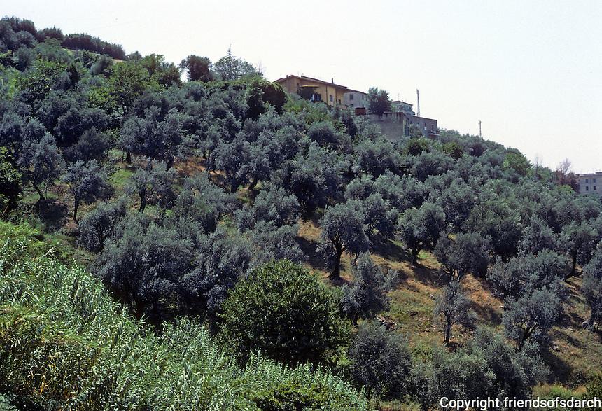 Tivoli: Villa D'Este--view of olive groves, hillside, southwest of villa. Photo '83.