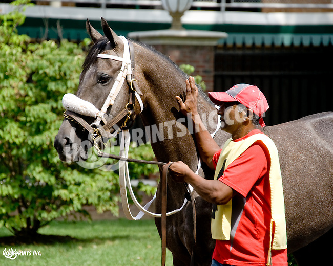 Let Me Go at Delaware Park on 8/21/14