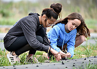 NWA Democrat-Gazette/DAVID GOTTSCHALK Faith Caviness (left), an eighth grade student at The New School, and Elektra Ewing, a seventh grade student, plant leeks Thursday, April 11, 2019, with other seventh and eighth grade students from the school during a service project at Cobblestone Farms in Fayetteville. Cobblestone Farms is a non profit that donates half of the food grown to food insecure families in the northwest Arkansas area.