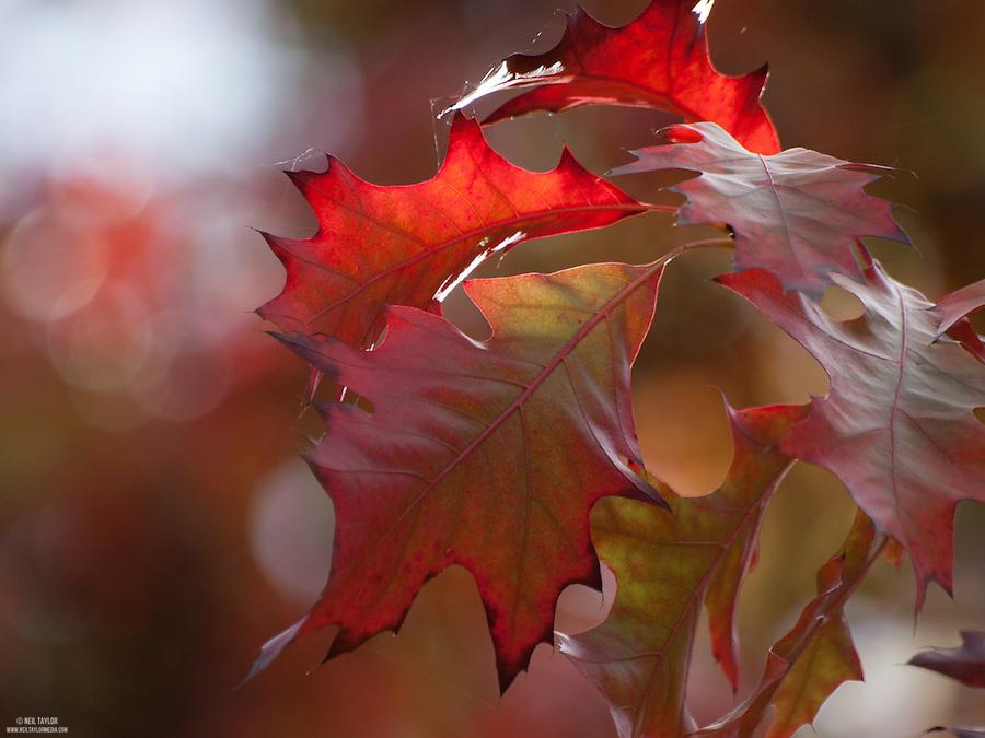 Autumn Colours at Wakehurst Place, West Sussex