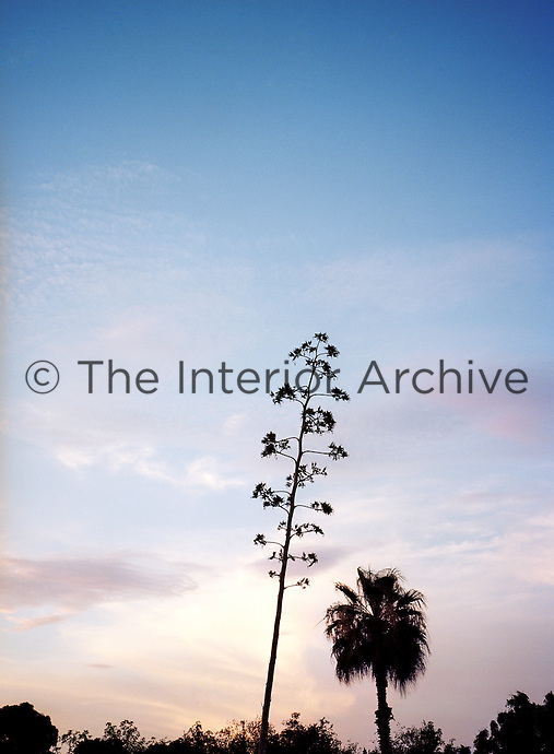 A cactus flower is dramatically silhouetted against the evening desert sky