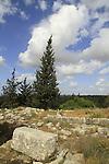 Israel, Sharon region, Hurvat Dayar in Rosh Haayin forest