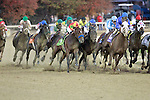 Blame (#5 in the middle) begins to move and upsets Zenyatta (#8) by a head in the Breeders Cup Classic.
