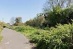 23/04/2015 View of an area of land behind Woodland Road in the Keyford area of Frome, Somerset, UK, which is awaiting development into new housing.<br /> <br /> Photo &copy; Tim Gander. All rights reserved. For licensing enquiries, please contact tim@timgander.co.uk or call 07703 124412.