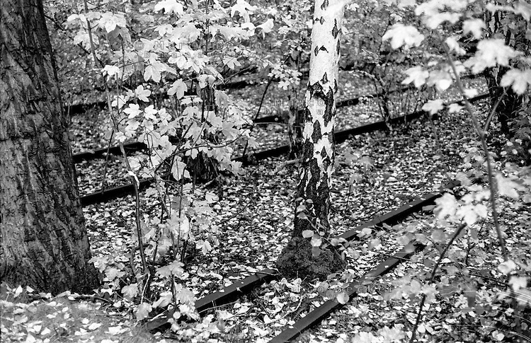 "Berlino, quartiere Kreuzberg. Vecchi binari in disuso di una linea ferroviaria abbandonata, immersi nella vegetazione del parco am Gleisdreieck (""triangolo delle rotaie"") --- Berlin, Kreuzberg district. Old disused track of an abandoned railway line covered by vegetation at the Park am Gleisdreieck (""rails triangle"")"