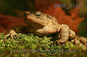 Carl, ANIMALS, wildlife, photos(SWLA2142,#A#)