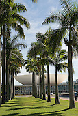 Brasilia, Brazil. Planted grove of Imperial Palms (roystonea oleraceae) next to the National Congress.