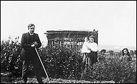BNPS.co.uk (01202 558833)<br /> Pic: GardenMuseum/BNPS<br /> <br /> In the early twentieth century allotments were the venue of daytrips for the whole family, with picnics taken for Sunday lunch and teas.<br /> <br /> These fascinating old pictures show that allotments have been a passion of the British for centuries.<br /> <br /> Today, more than 90,000 people are on waiting lists to get their own little patch of land to grow vegetables, and the pastime was just as popular in the early years of the 20th century.<br /> <br /> Garden historian and lecturer Twigs Way has sourced dozens of images of green-fingered Brits tending to their allotments during the 'allotment craze' amongst the middle classes sparked by the Allotments Act of 1908 which required councils to supply them when demanded.<br /> <br /> Families would decamp to the allotment on a Sunday and picnic among the cabbages, dividing tasks with the husband digging, the wife collecting crops and the children weeding or caterpillar picking.<br /> <br /> They grew cabbage, carrots, leeks, parsnips, beet, marrow and spinach while also staying faithful to the Victorian favourites seakale, salsify, scorzonera and asparagus.<br /> <br /> The allotments helped keep the British fed during the two world wars but fell out of favour in the 1960s and 1970s with elderly plot holders cast as villains in the battle to free up land for the housing boom.<br /> <br /> But, prompted by a desire amongst Brits to reconnect with the land, they are now in the throes of a full-scale revival.
