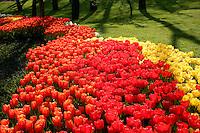Tulips at Emirgan Park, Istanbul, Turkey