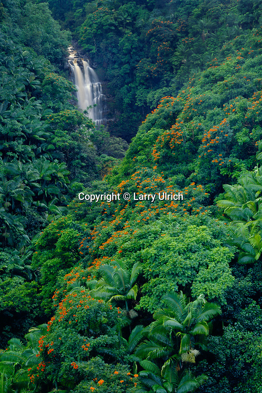 Nanue Falls with tulip trees<br />