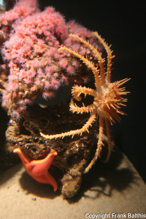 crab, anemones and star