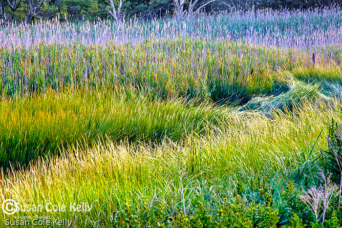 The Great Marsh in Ipswich, MA, USA