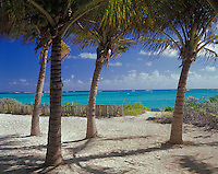 Anguilla, BWI<br /> Palm shaded beach and turquoise waters of Upper Shoal Bay, Caribbean Sea