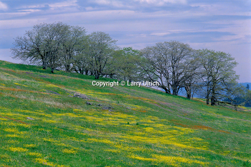 Buttercups and Oregon white oaks<br />