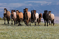 Wild Horses 2017