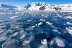 Pancake Ice in Lindblad Cove, Antarctica