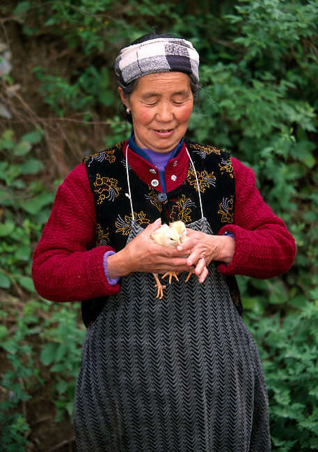 woman in traditional headdress holding baby chicks; colorful clothing; afternoon; rural village near Wuxi, China, Asia; 042503