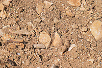 Domaine Clos Marie. Pic St Loup. Languedoc. Calcaire ebouilli, calcareous compacted soil type. Terroir soil. France. Europe. Vineyard. Soil with stones rocks. Sand. Calcareous limestone.