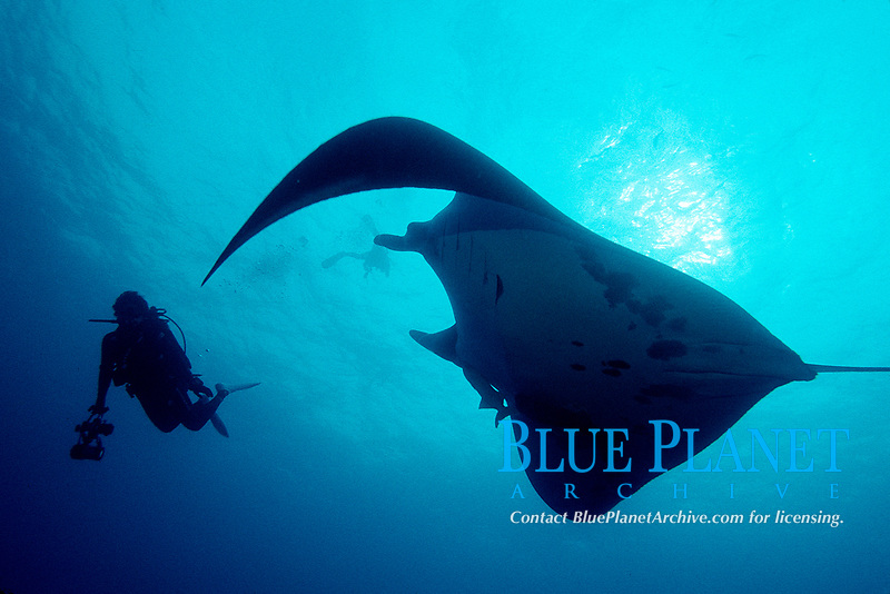 reef manta ray, Manta alfredi, Irimote Island, Japan, Pacific Ocean