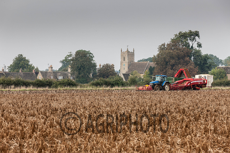 Lifting potatoes in Lincolnshire<br /> Picture Tim Scrivener 07850 303986