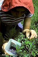 HS38-001z  Blueberries- woman picking wild blueberries