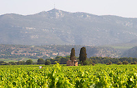 Montpeyroux. Languedoc. A tool shed hut in the vineyard. France. Europe. Vineyard. Mountains in the background. Mont Saint Baudille.