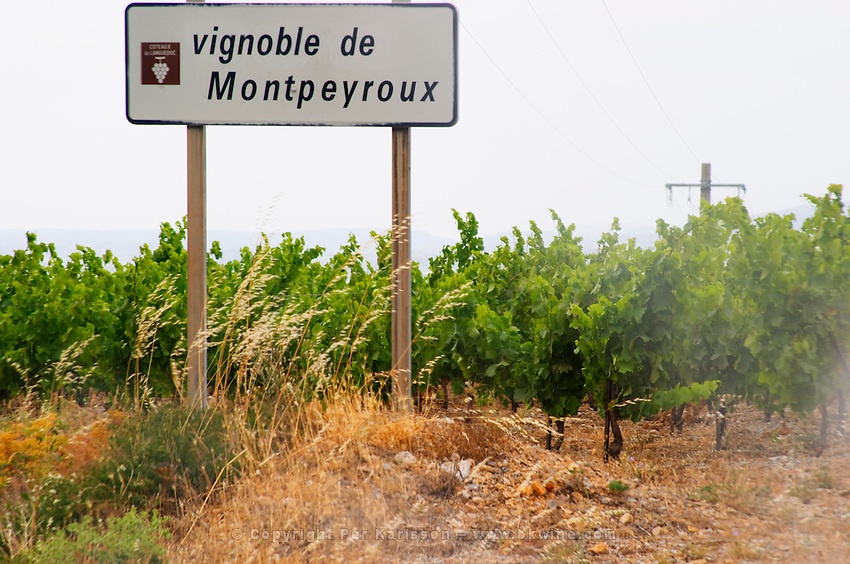 Vignoble de Montpeyroux. Montpeyroux vineyards. Montpeyroux. Languedoc. France. Europe. Vineyard.