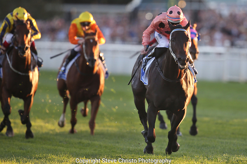 Black Caviar ridden by jockey Luke Nolen wins The TJ Smith Stakes, her 25th race in a row.  It is a success record not equalled for over 100 years. Randwick Race Course, Sydney Australia. Saturday 13th April 2013. Photo: (Steve Christo)