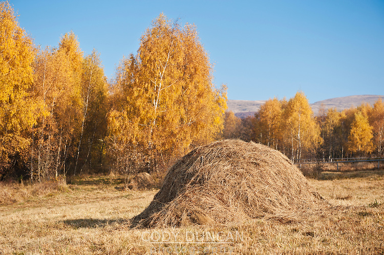 Pile of grass in field with autumn colored trees, Bieszczady mountains, Poland