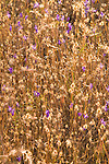 Purple Wildflowers in a Field