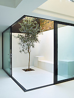 The concrete floor of the kitchen/dining area extends out through sliding glass windows to an enclosed sunken courtyard planted with an olive tree