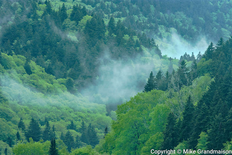 Forest in fog<br />Kouchibuguac National Park<br />New Brunswick<br />Canada