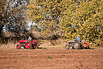 Antique tractors plowing a field in fall during the Branch 158 EDGE & TA Fall Plow Day and Plowing Seminar near Pleasant Grove, Calif...Silmer Scheidel Farm..C. 1954 Ferguson TO 35 and C. 1950 Ferguson TO 20 tractors