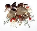 Mushroom montage. Portfolio only.