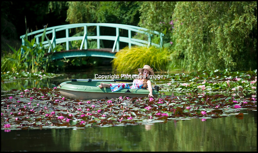BNPS.co.uk (01202 558833)<br /> Pic: PhilYeomans/BNPS<br /> <br /> Consider the lilies.<br /> <br /> This may look like its Monet's world famous garden in Giverny in France but in fact Ria Dunseith(27) is relaxing amidst a stunning display of lilies in Weymouth on the baking hot south coast of Britain.<br /> <br /> The heatwave has created a stunning impressionistic masterpiece at Bennetts Water Gardens near Weymouth in Dorset this weekend.<br /> <br /> Owner Angie Bennett says the long cold winter and blazing summer has produced the best show of lilies in the 22 year history of the garden's national collection.<br /> <br /> Ria makes the most of her lunch break from the attractions restaurant to relax amongst the 8 acres of ponds containing over 140 varieties of lily.<br /> <br /> The beautiful gardens replicate Monet's world famous home and visitors flock from all over the country to view its stunning blooms.