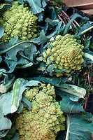 FOOD GROUPS: VEGETABLES<br /> Romanesco Broccoli<br /> Brassica oleracea<br />  Broccoli is high in folate, vitamin C and potassium. It is also a good source of calcium, iron and fiber