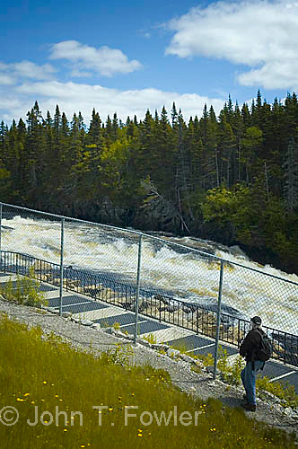 Atlantic Salmon ladder at waterfall on Torrent River, Newfoundland