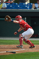 Auburn Doubledays catcher Erik VanMeetren (13) catches a throw during a game against the Batavia Muckdogs on September 7, 2015 at Falcon Park in Auburn, New York.  Auburn defeated Batavia 11-10 in ten innings.  (Mike Janes/Four Seam Images)