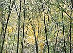 Fall landscape, Helsingborg region, Sweden , beech forest