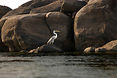 Pará State, Brazil. Xingu River. Heron.