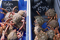 Europe/France/Bretagne/22/Côtes d'Armor/Saint-Brieuc: Araignées de mer males et femelles sur le marché