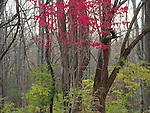 Trail, Bellbrook, Ohio.