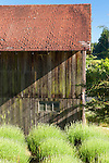 Beds of lavender set against the backdrop off an old barn. This image is available through an alternate architectural stock image agency, Collinstock located here: http://www.collinstock.com