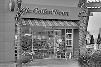 The Coffee Bean, El Paseo Drive, Palm Desert, CA, Palm Trees; California; Coachella Valley; Desert; Black and White