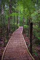 Footpath through Waipoua Kauri Forest, Northland Region, North Island, New Zealand